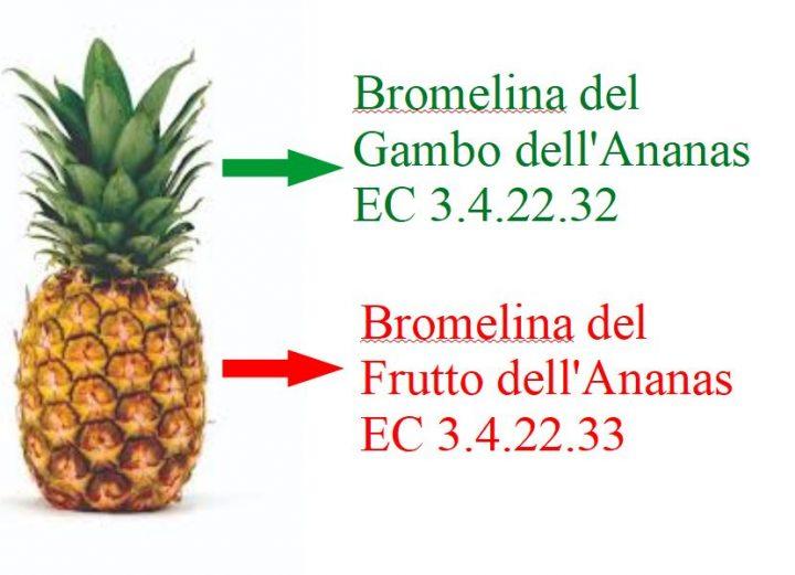 Nel frutto dell'Ananas è contenuto una miscela di enzimi proteolitici, fosfatasi, sulfatasi, perossidasi, inibitori proteici, glucosidasi, etc, dalle proprietà antinfiammatorie, dimagranti, drenanti, fibrinolitiche, cardiovascolari e antitumorali. Esistono 2 tipi di Bromelina: quello del gambo e quello della polpa dell'Ananas.