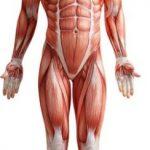 Il Corpo Umano è Costituito Anche da Zuccheri