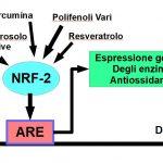 Induttori Naturali delle Difese Antiossidanti