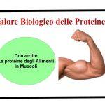Valore Biologico delle Proteine