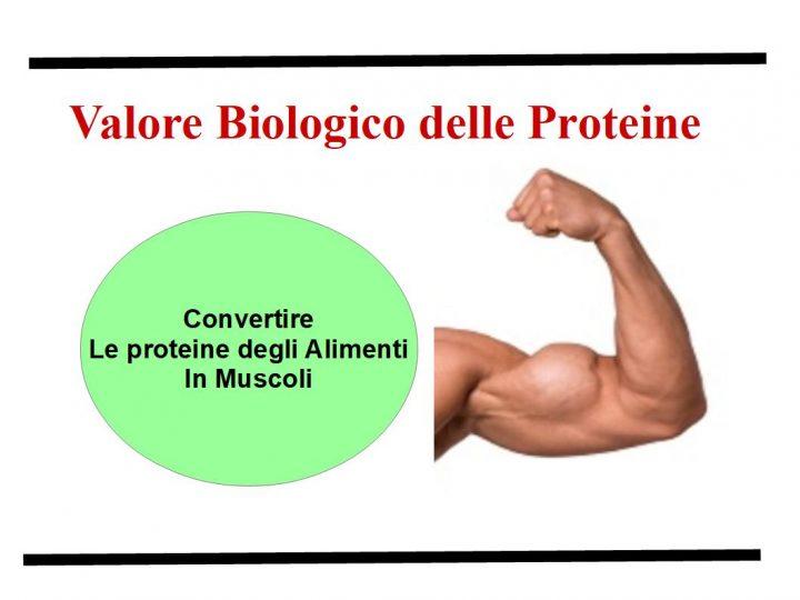 l Valore Biologico delle Proteine alimentari, è una misura della capacità di queste di essere assorbite ed incorporate  nell'organismo umano per formare ossa, muscoli, tendini, organi, pelle, etc.