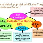 Lipoproteina HDL della Giovinezza