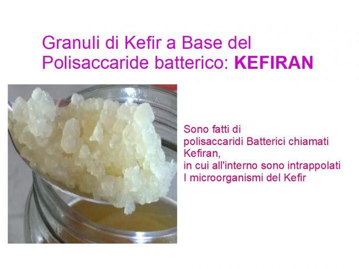 i granuli del Kefir sono costituiti dal Kefiran (che è un polisaccaride batterico), al cui interno sono intrappolati i batteri lattici e lieviti probiotici.