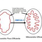 Omega-3 e Respirazione cellulare