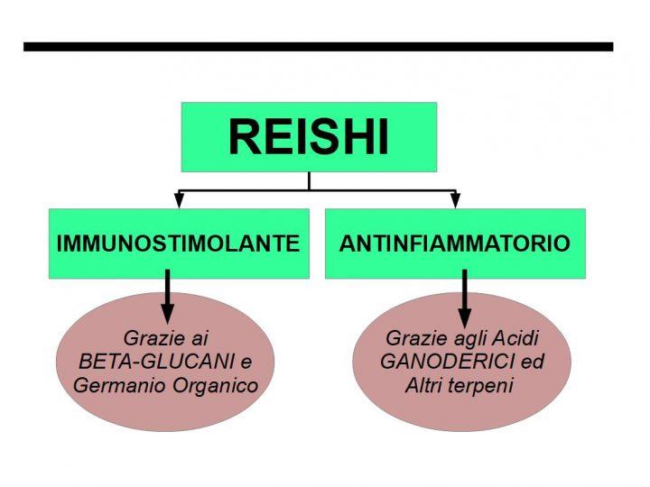 Reishi Immunomodulante