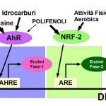 Idrocarburi Aromatici Cancerogeni