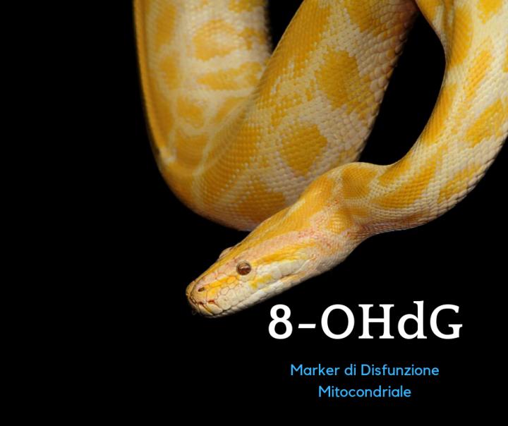 8-OHdG Marker della disfunzione mitocondriale