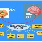 Cervello Accumula DHA