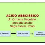 Acido Abscissico: Un Ormone Vegetale presente anche nell'Uomo