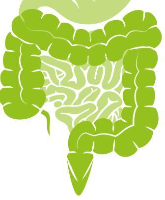 Budella Integre con Zinco e Vitamina A