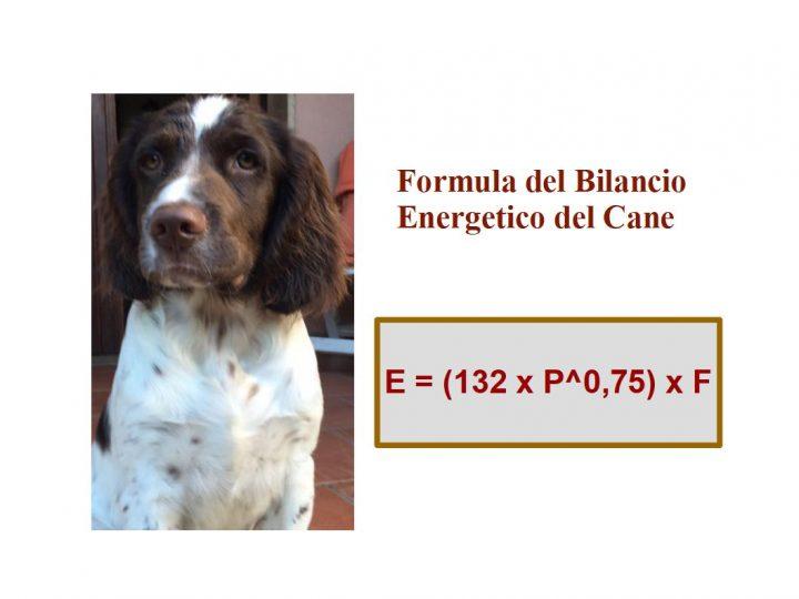 quante crocchette dare al cane? Formula del Bilancio energetico del Cane; E = (132 x P^0.75) x F