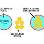 Differenza tra Tessuto Adiposo e Grasso