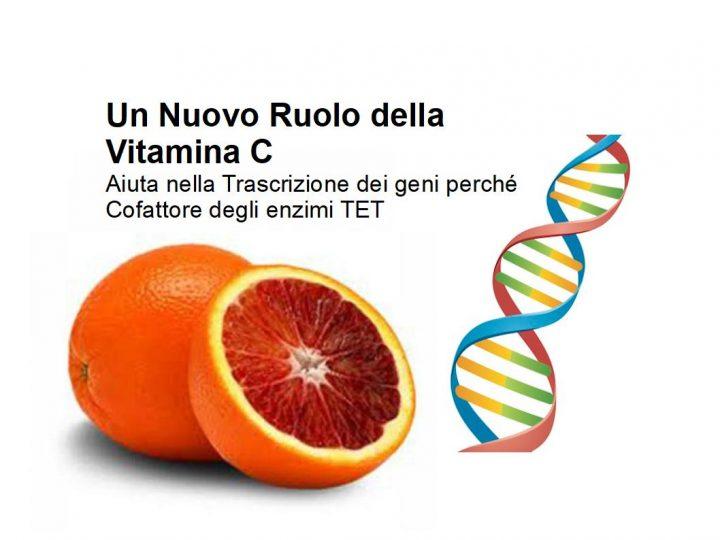 La vitamina C fa bene anche al DNA