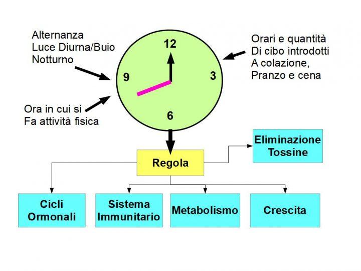 Lo stile di Vita regola il ritmo biologico