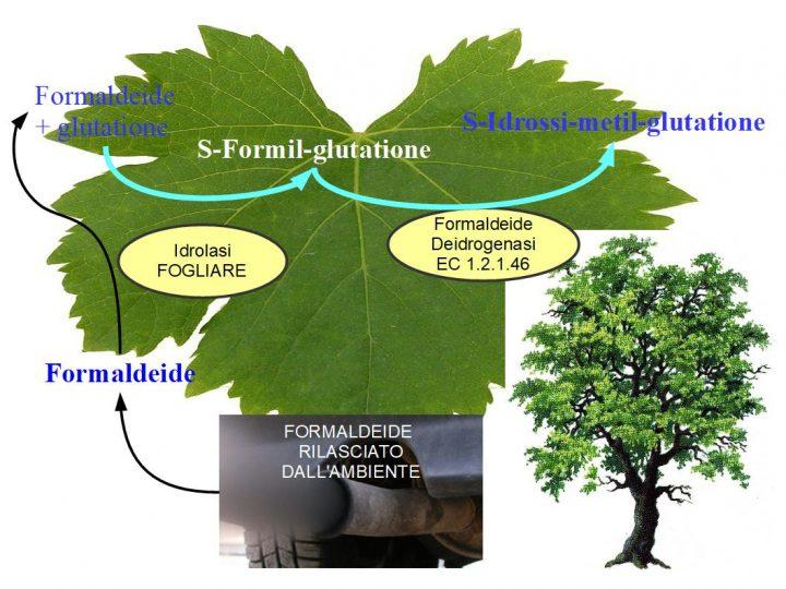 Le Piante Rimuovono la Formaldeide dall'ambiente