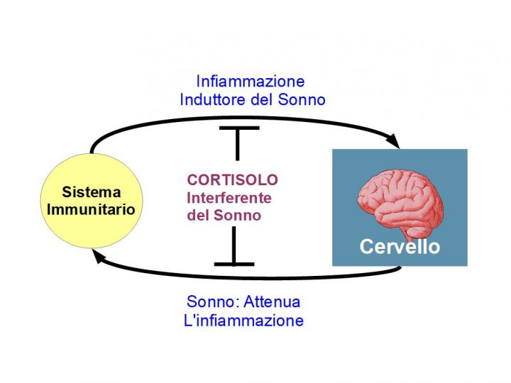 """Le attività quotidiane di studio, lavoro, sport e vita sociale, generano un certo carico di citochine infiammatorie, prodotte dal sistema immunitario, che induce il cervello """"a predisporsi per il sonno; Il Sonno profondo, rigenera l'organismo e la mente, attenuando l'infiammazione e migliorando le competenze immunitarie. Lo stress generata da una eccessiva infiammazione, può attivare anche la secrezione di cortisolo e catecolamine, che disturbono il  sonno. Pertanto per favorie un buon sonno veglia, occorre essere moderatamente attivi durante la giornata, evitando lo stress cronico, perché lo stress interferisce sui meccanismi delle citochine infiammatorie che innescano il sonno."""