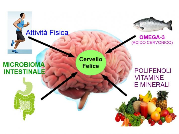 Il Cervello è Capace di Rigenerarsi
