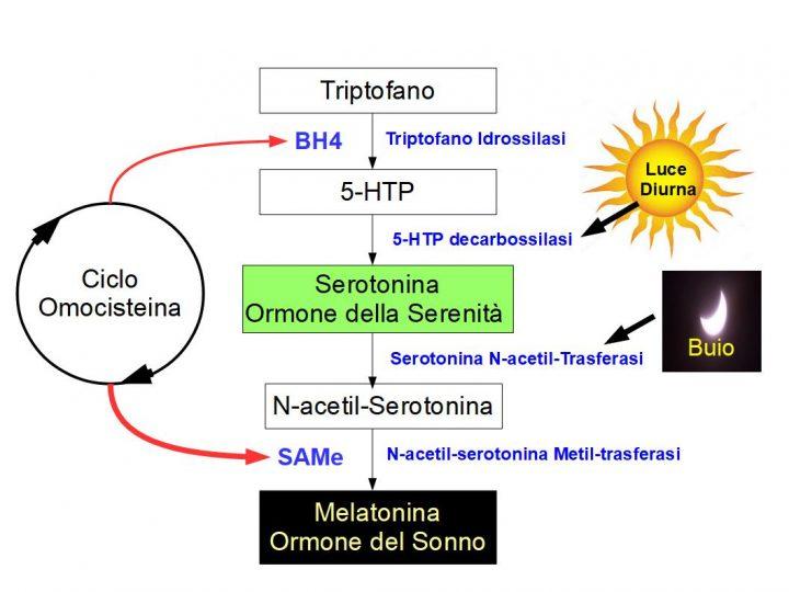Anche la Pelle Produce Serotonina