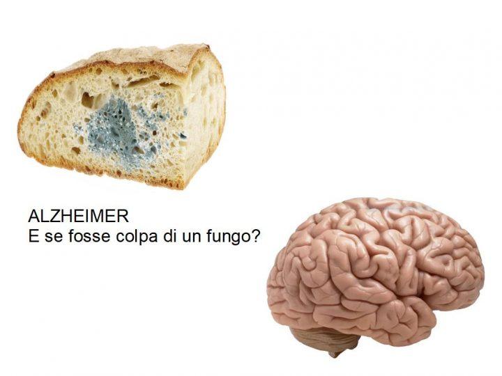 L'Alzheimer: E se fosse colpa di un Fungo?