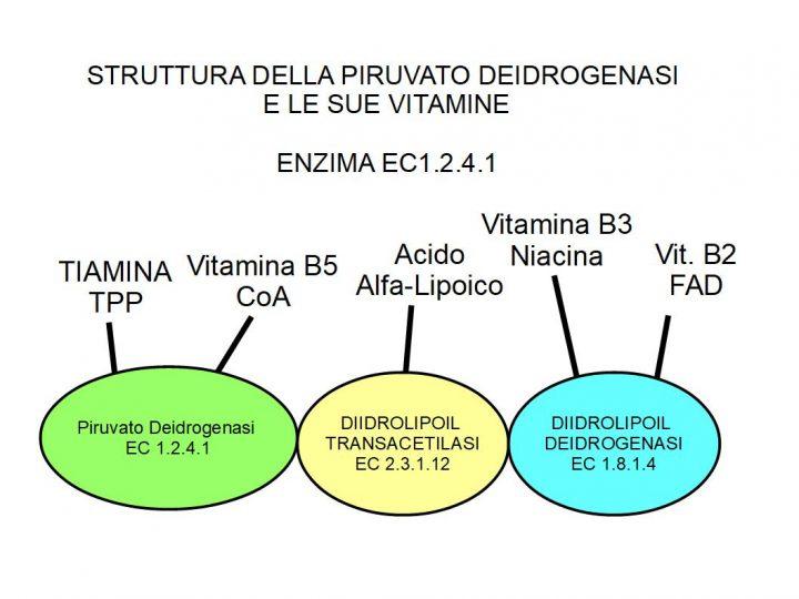 Piruvato Deidrogenasi e Diabete