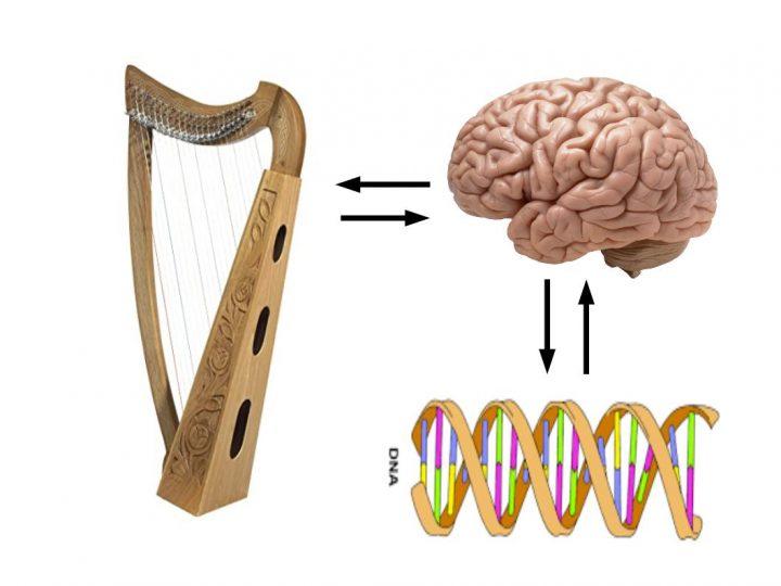 Cervello e Vibrazioni: L'Arpa delle Emozioni