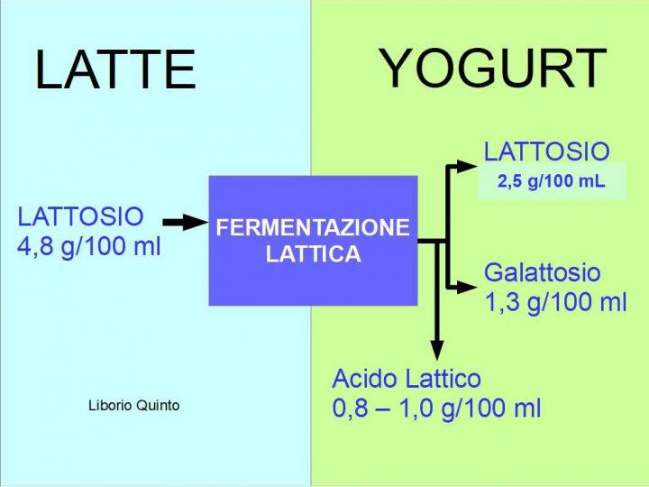 Yogurt: Scheda Tecnica