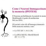 Come i Neuroni Accumulano la Memoria