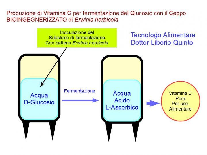 Produzione Industriale di vitamina C (acido L-ascorbico) per fermentazione, adoperando il ceppo di Erwinia herbicola.