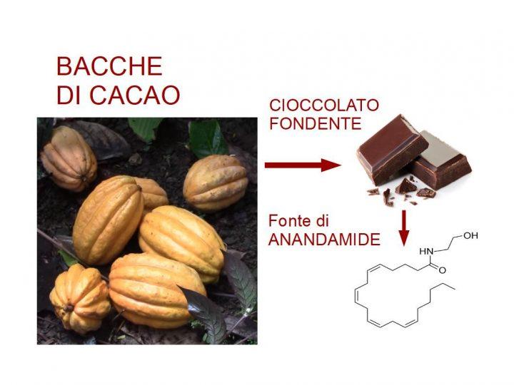 Anandamide del cioccolato
