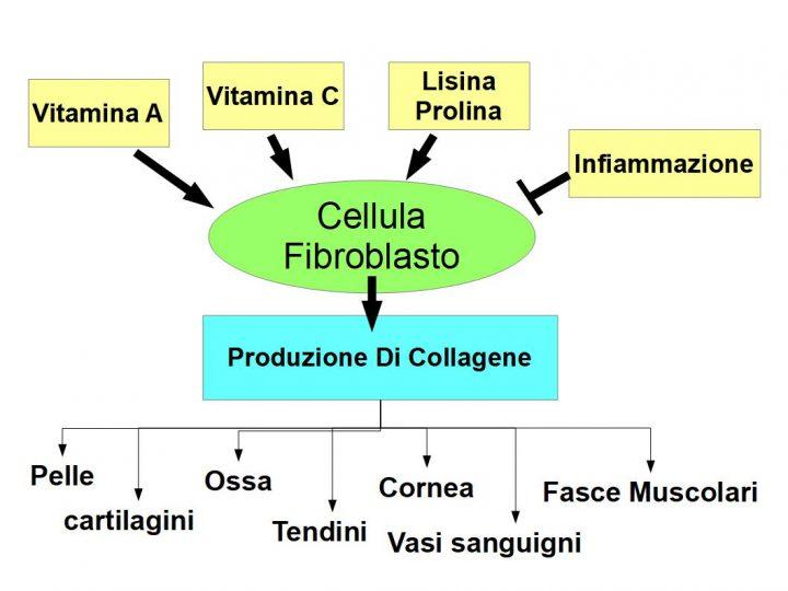 Il Collagene ed i suoi Nemici