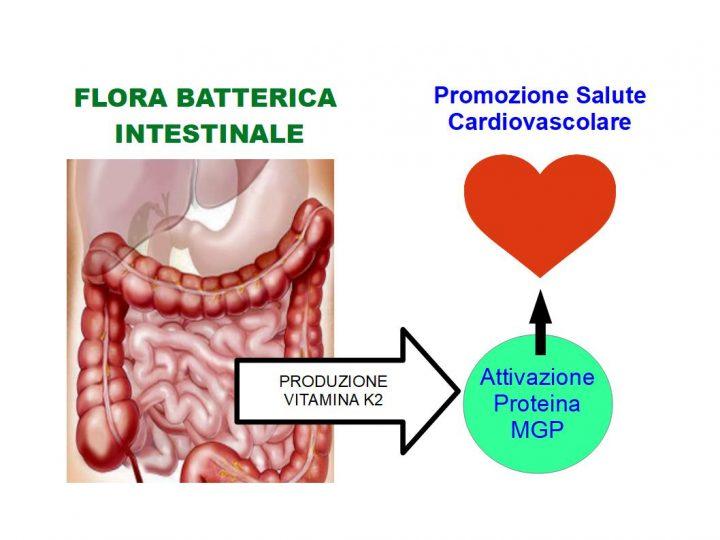 L'Intestino Influenza la Salute del Cuore