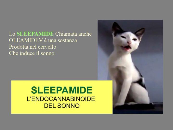 Sleepamide: L'endocannabinoide del Sonno