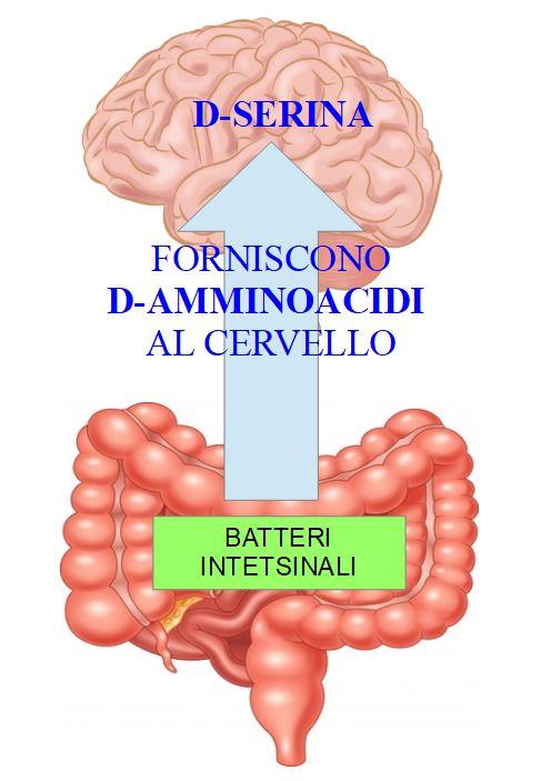 D-Amminoacidi Batterici e salute cerebrale
