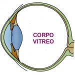 Nutrire il Corpo Vitreo dell'Occhio