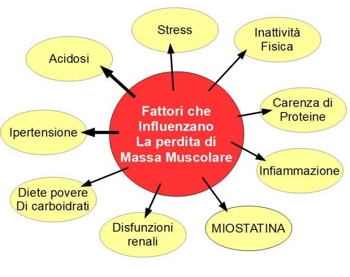 La perdita della massa muscolare
