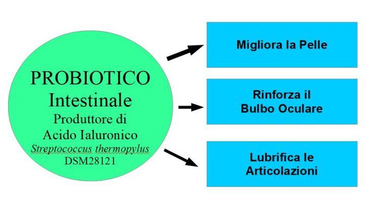 Fermenti Lattici produttori di Acido Ialuronico che ringiovaniscono la Pelle