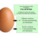 Uova Fertilizzate e Follistatina