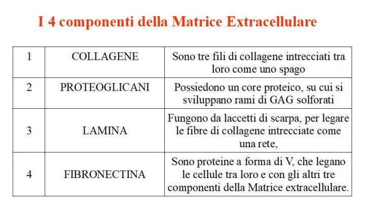 Matrice extracellulare: I 4 componenti
