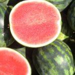 La frutta è povera di proteine, ma sono quasi tutti enzimi