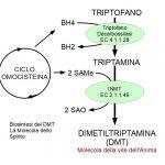 Il DMT: La Molecola dello Spirito