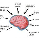 BDNF: Il fertilizzante del cervello