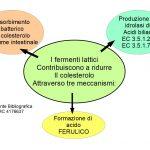 I Fermenti Lattici contro il Colesterolo