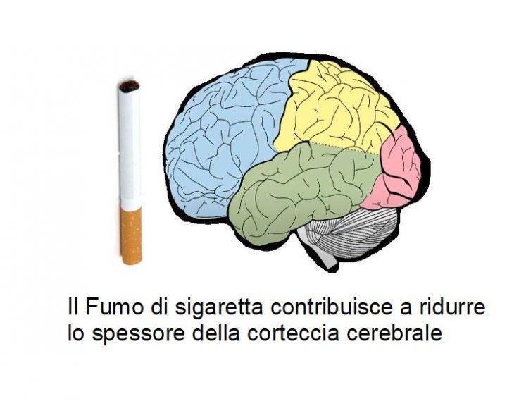 Il Fumo Corrode la Corteccia Cerebrale