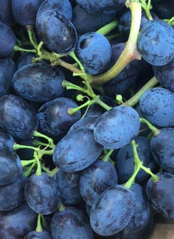 La migliore uva è quella nera