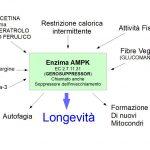 L'enzima Soppressore dell'Invecchiamento