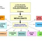 La Via che porta al colesterolo è vitale