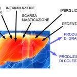 Il fegato: Fabbrica del grasso
