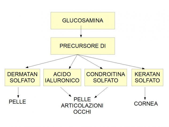 Glucosamina: Benefici per la pelle e fonti di produzione