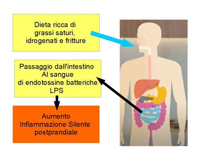 Dieta ricca di grassi ed infiammazione da endotossina LPS