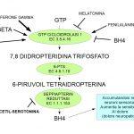 Dieta contro il Dolore Neuropatico e BH4